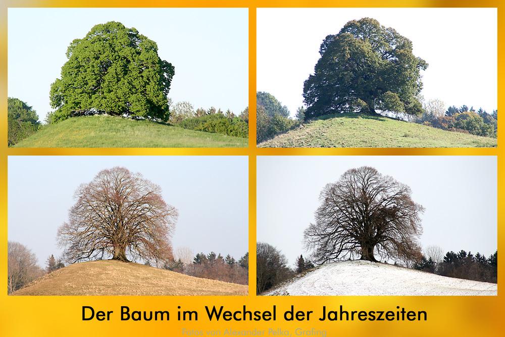 Der Baum im Wandel der Jahreszeiten