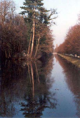Der Baum im Wasser - Schlosspark Laxenburg