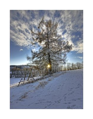 Der Baum im Winter