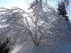 Der Baum im Winterkleid