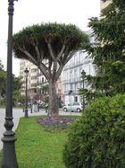 Der Baum in der Stadt