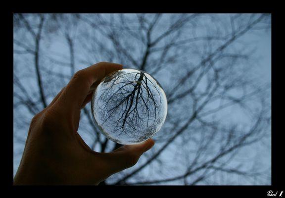 Der Baum in meiner Hand