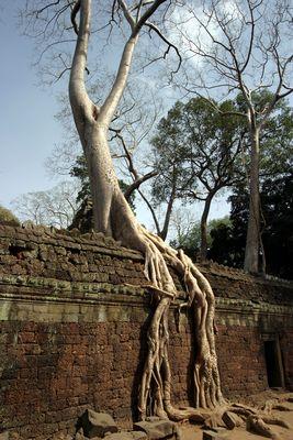 Der Baum ist stärker
