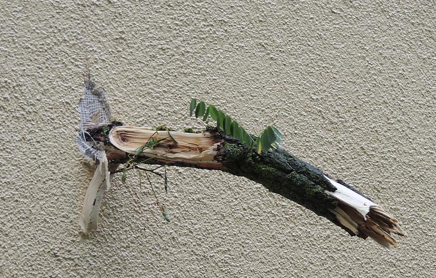 DER Baum ist toooot!