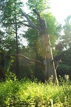Der Baum ist Tot aber schön