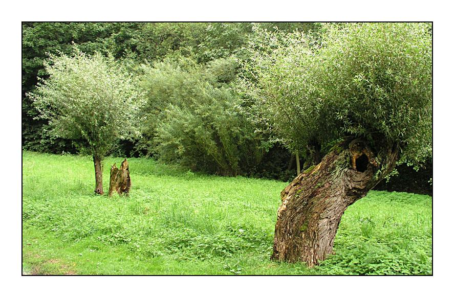 Der Baum lebt...