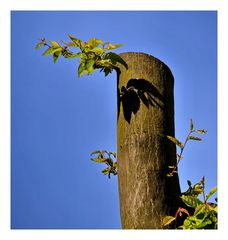 Der Baum stirbt nicht...
