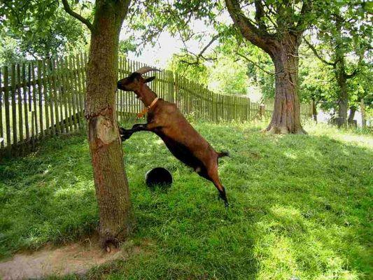 Der Baum stört mich schon lange, aber ich konnte ihn bisher nur etwas verbiegen
