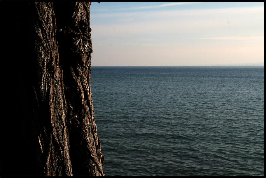 - der Baum und das Meer -