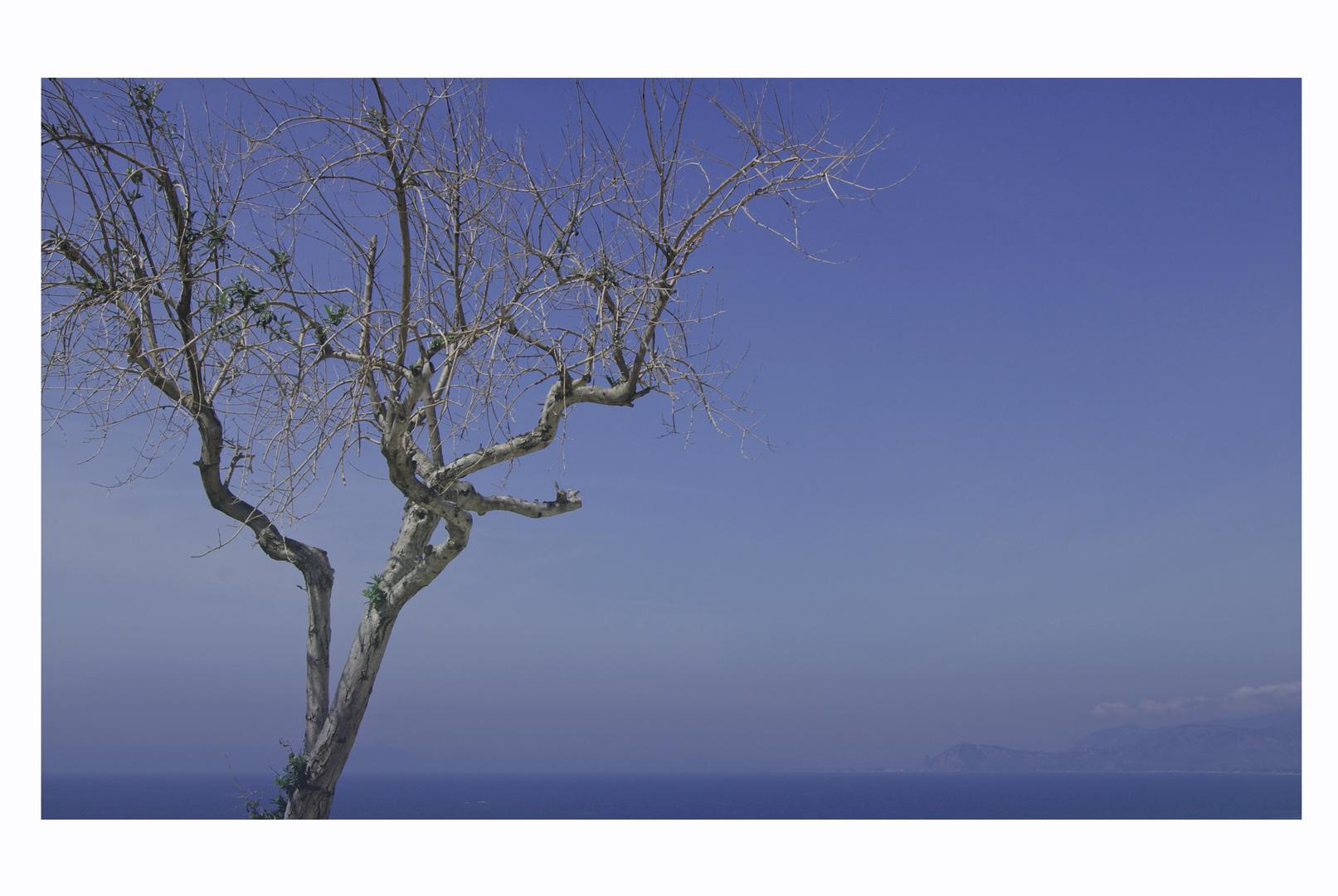 Der Baum und das Meer