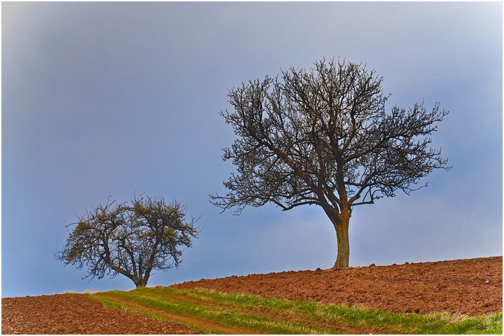 Der Baum und der Acker....