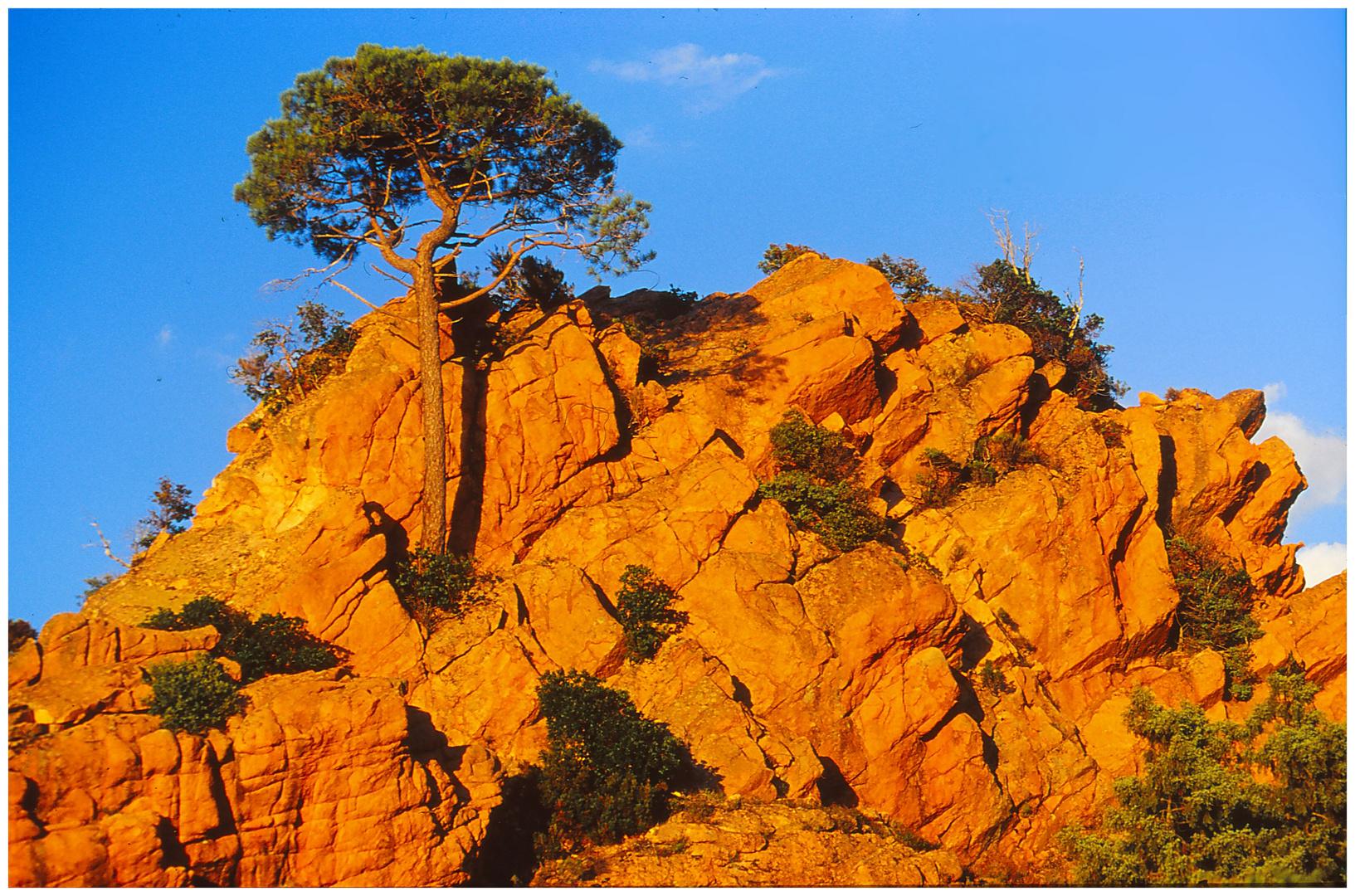 Der Baum und der Fels