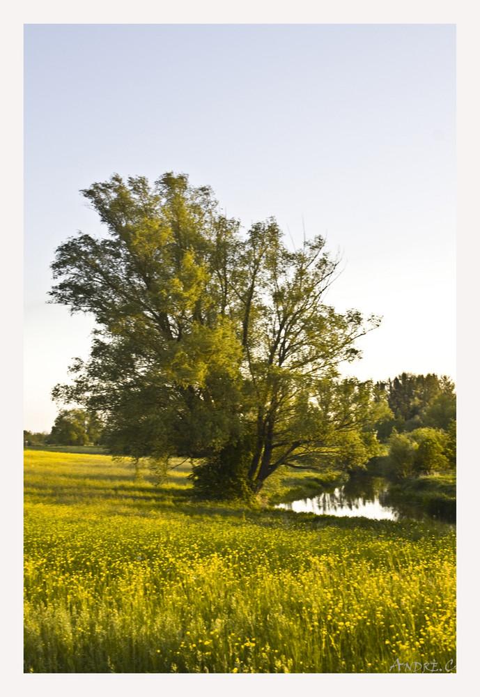 Der Baum und der Fluss