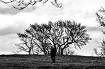 Der Baum und der Mensch