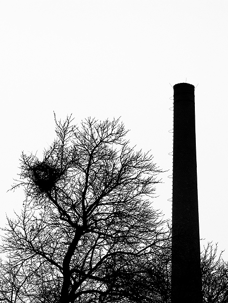 Der Baum und der Turm