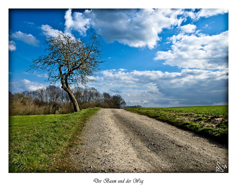 Der Baum und der Weg