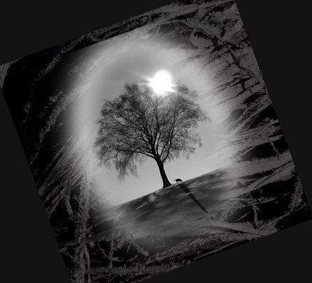 Der Baum und jemand der ihn schätzt!