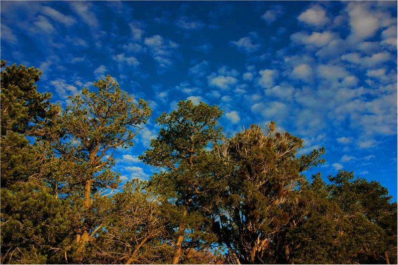 Der Baum unter'm Himmel