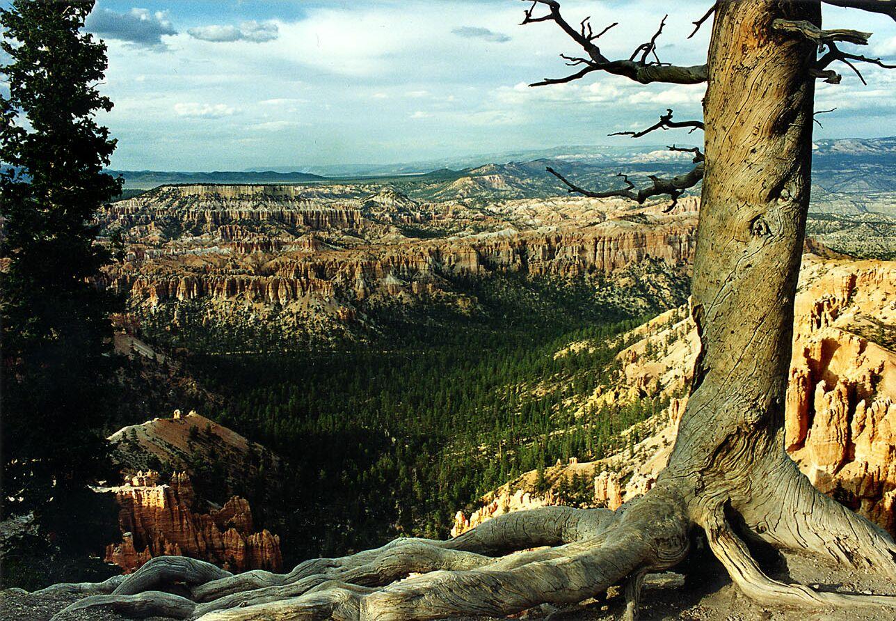 Der Baum - Utah/USA
