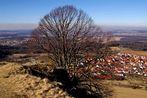 Der Baum - von oben gesehen