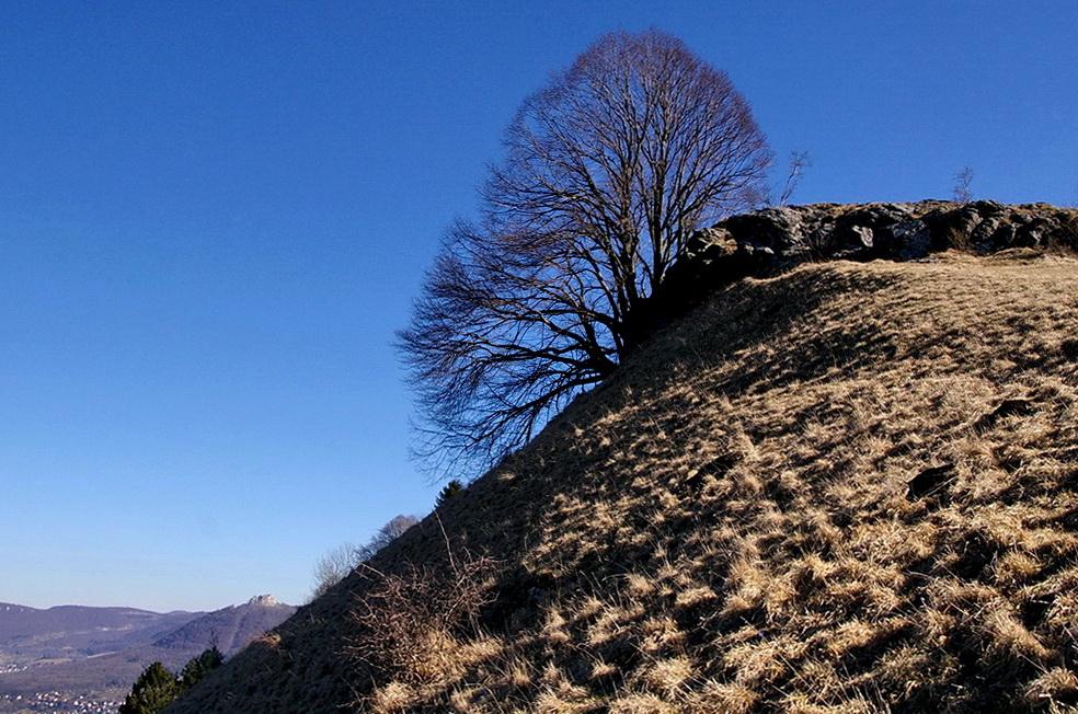 Der Baum - von unten gesehen