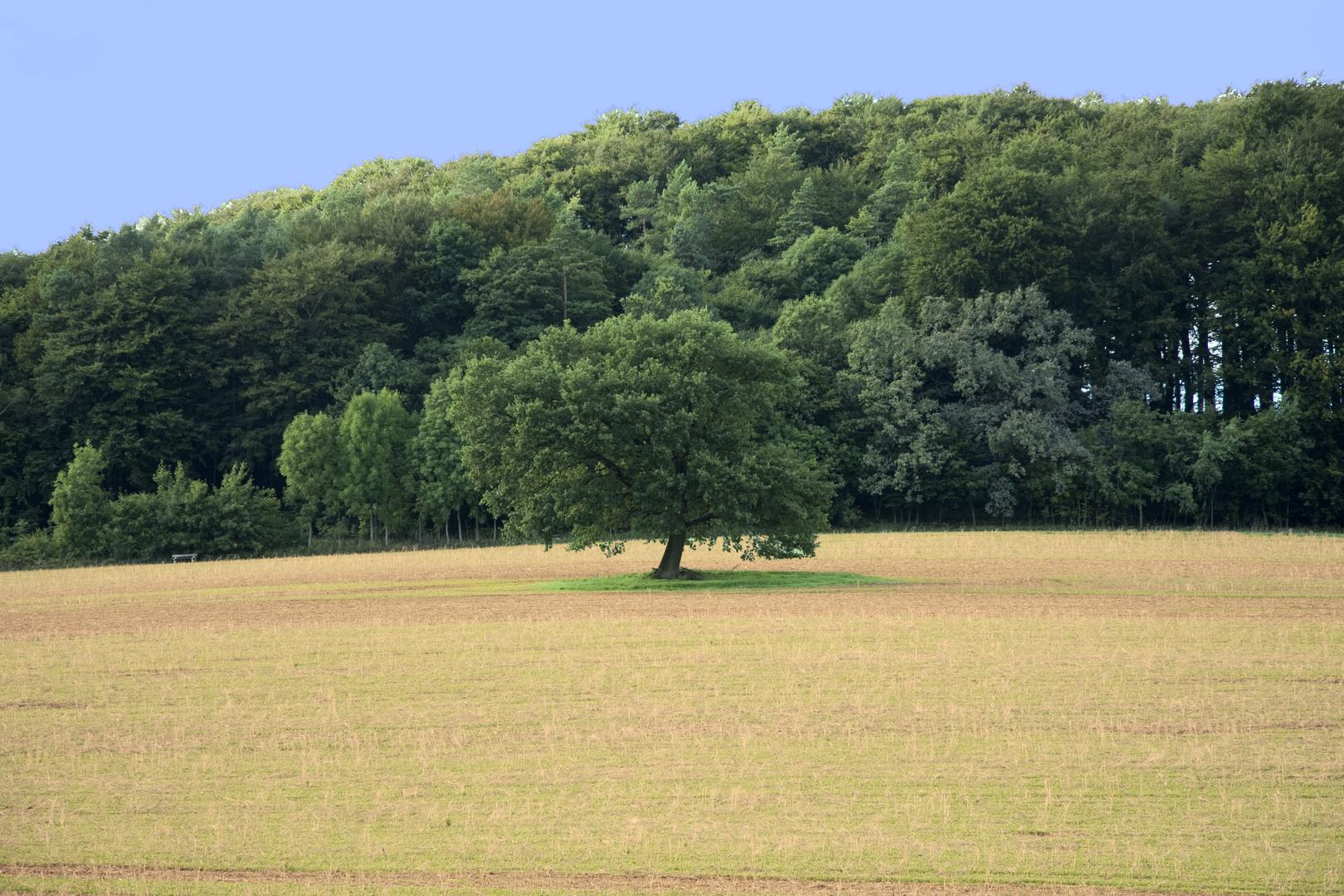 Der Baum_2