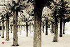 Der Baumpark Weilburg