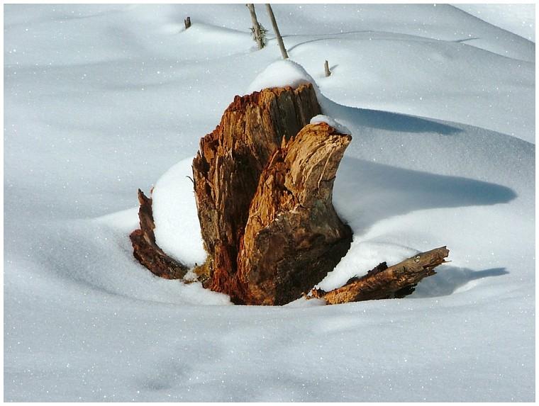 Der Baumstamm im Schnee