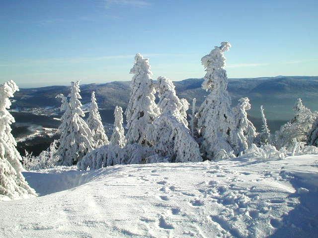 Der Bayerischer Wald im Winter /1