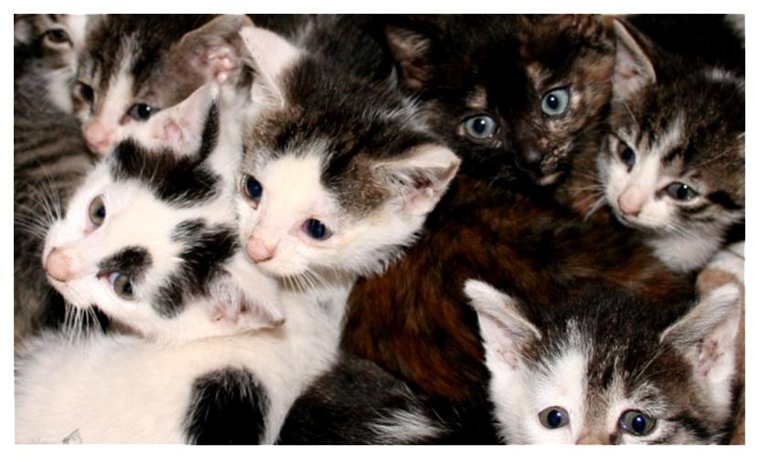 Der berühmte Katzenhaufen... :o)