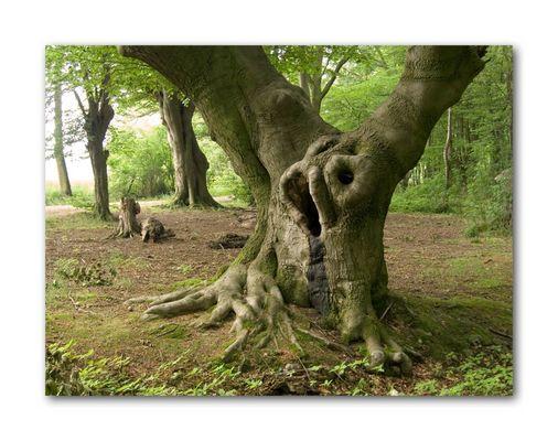 Der besondere Baum