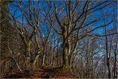 Der besondere Wald