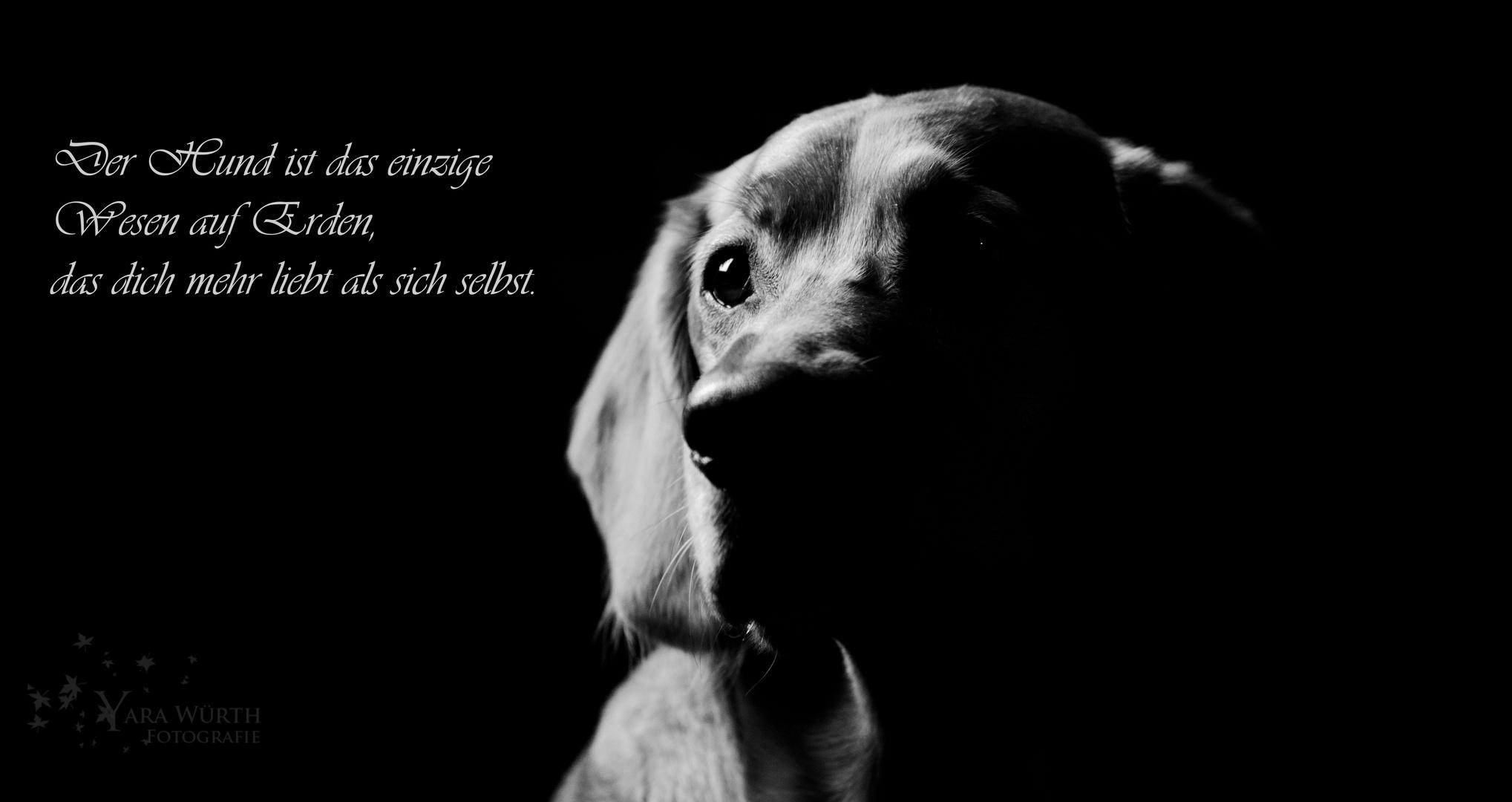 Der beste Freund...