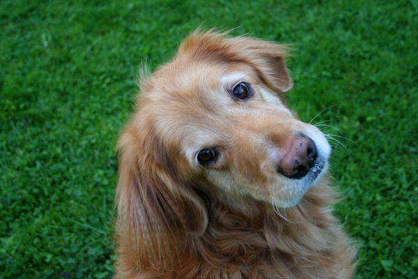 Der beste Hund der Welt ;o) 3
