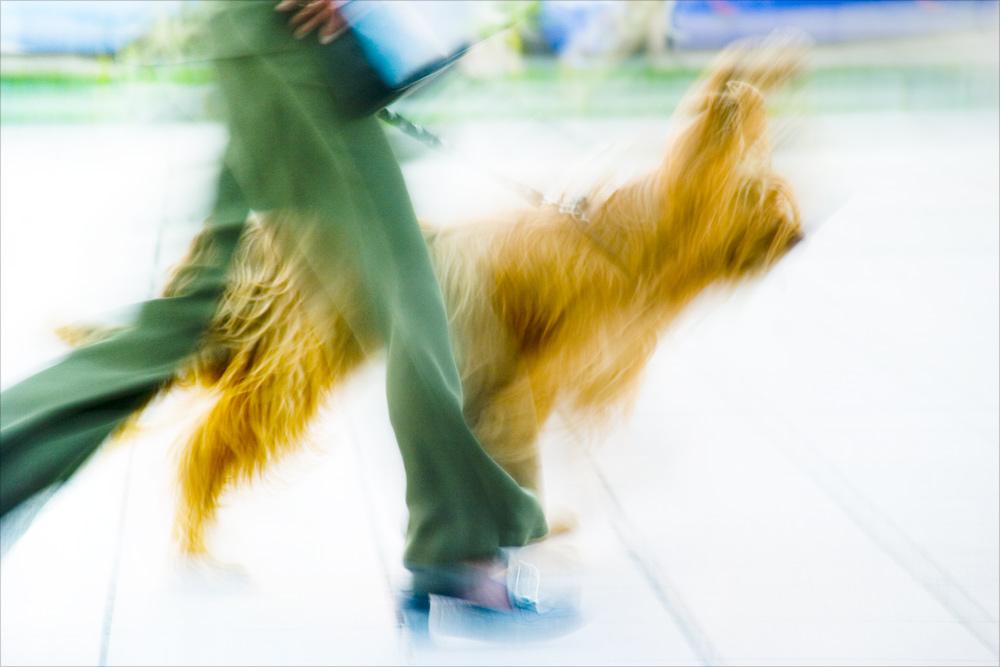 der bewegte Hund ...