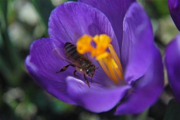 Der Bienenhimmel auf Erden