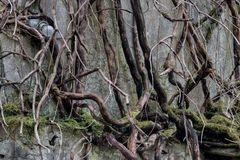 der Birnen-Baum...