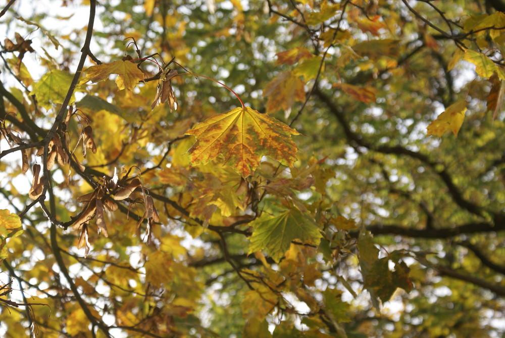 Der Blätterbaum