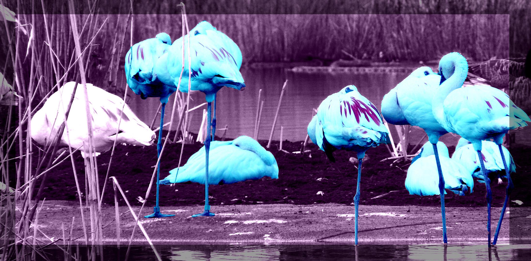 Der Blaue Flamingo