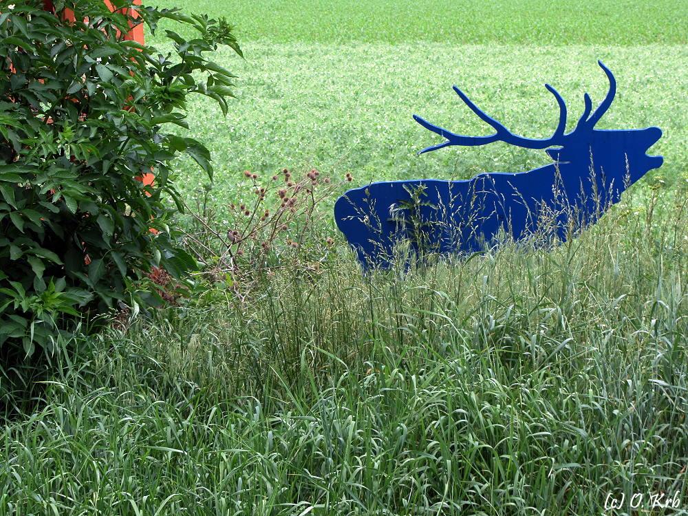 ... der blaue Hirsch ...