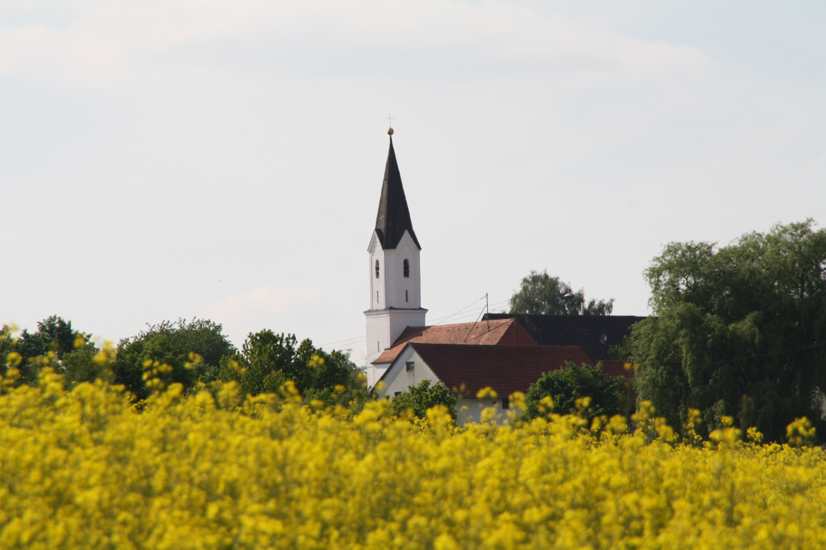 Der Blick auf die Kirche durch das Rapsfeld