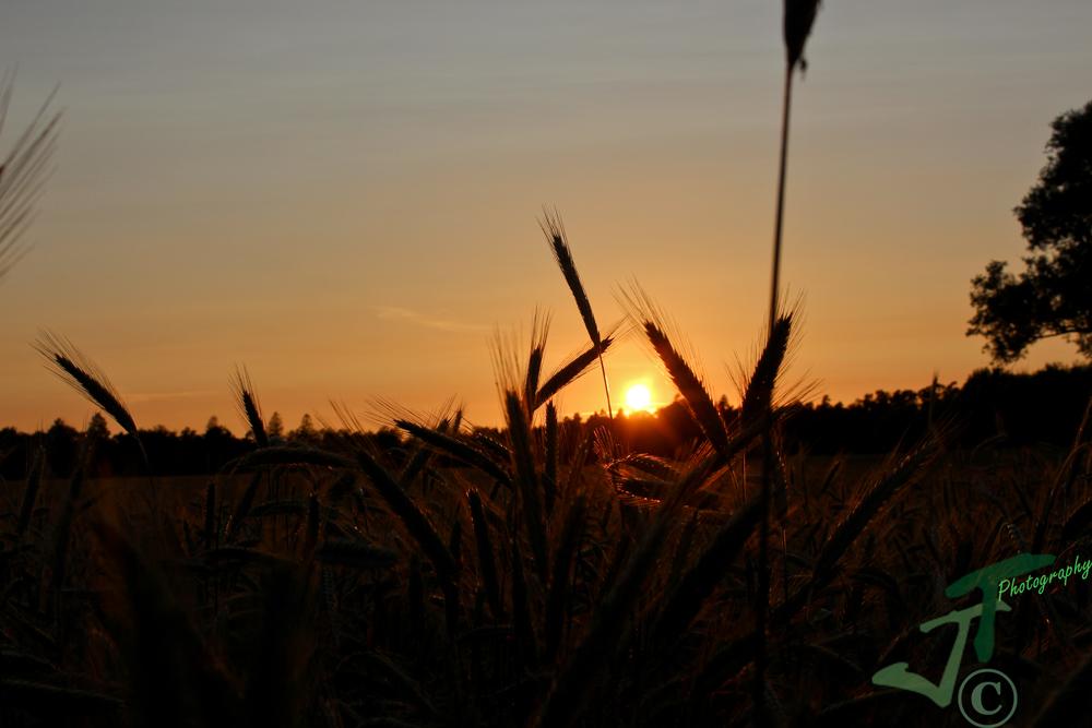 Der Blick durch das Getreide