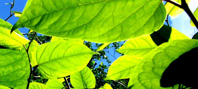 Der Blick durch die Blätter