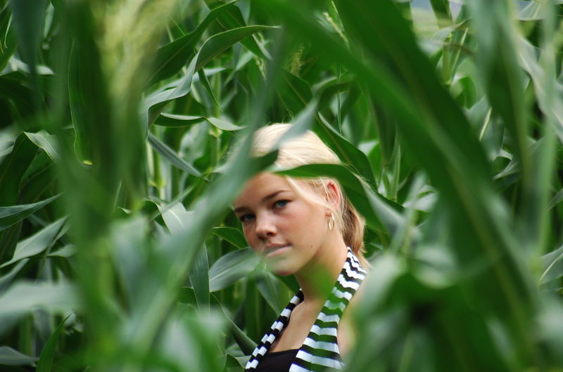 Der Blick durchs Maisfeld ^^