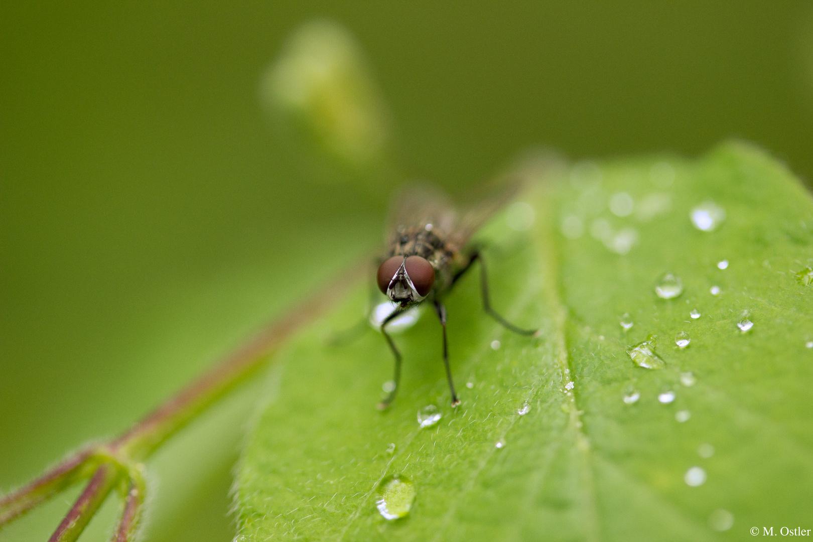 Der Blick einer Fliege... ;)