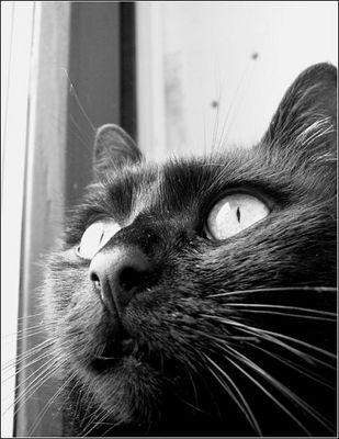 """""""der blick einer katze ..."""""""