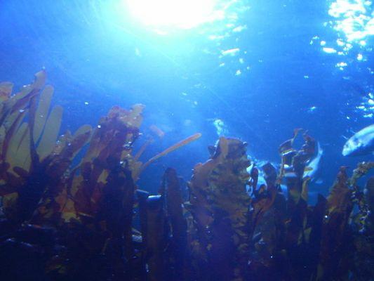 Der Blick eines Meereslebewesens