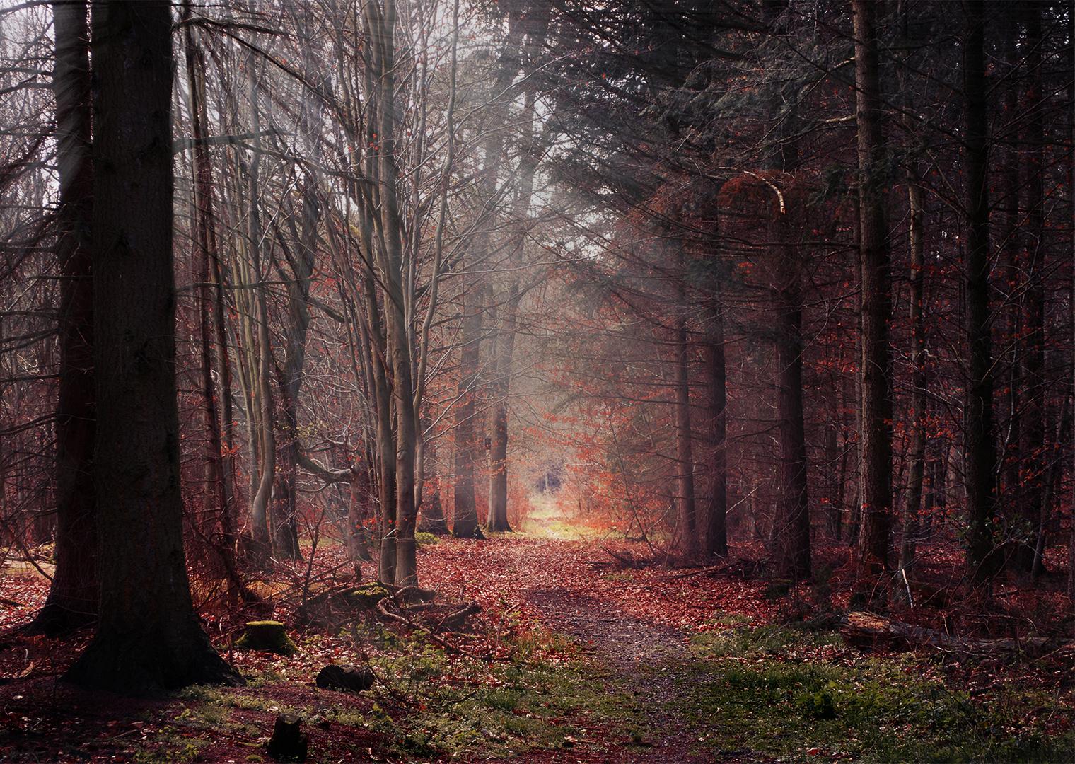 Der Blick in den Wald