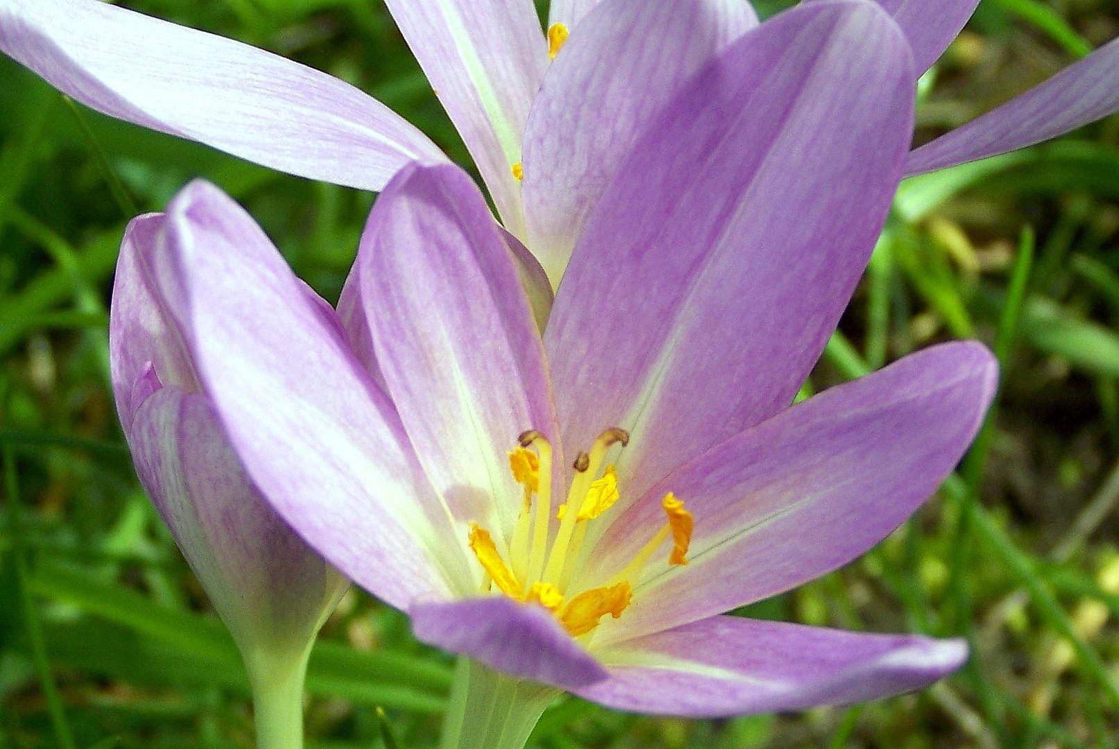 Der Blick in die Blume