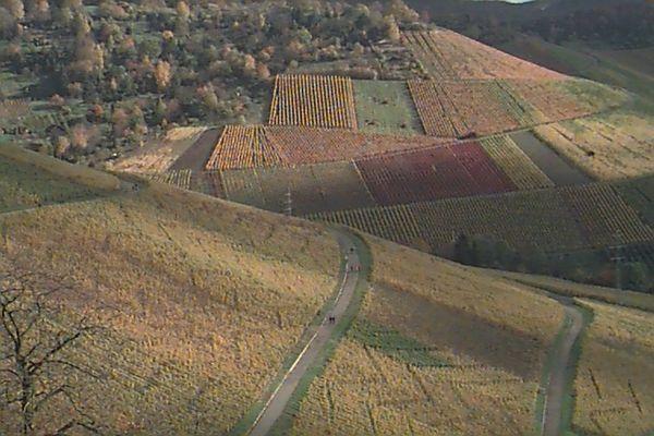 Der Blick in die Weinberge